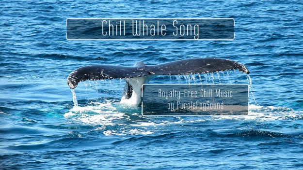 Royalty-Free Chill Music - Chill Whale Song